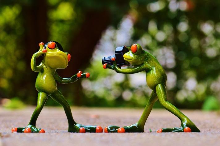 frogs-903167_1920.jpg
