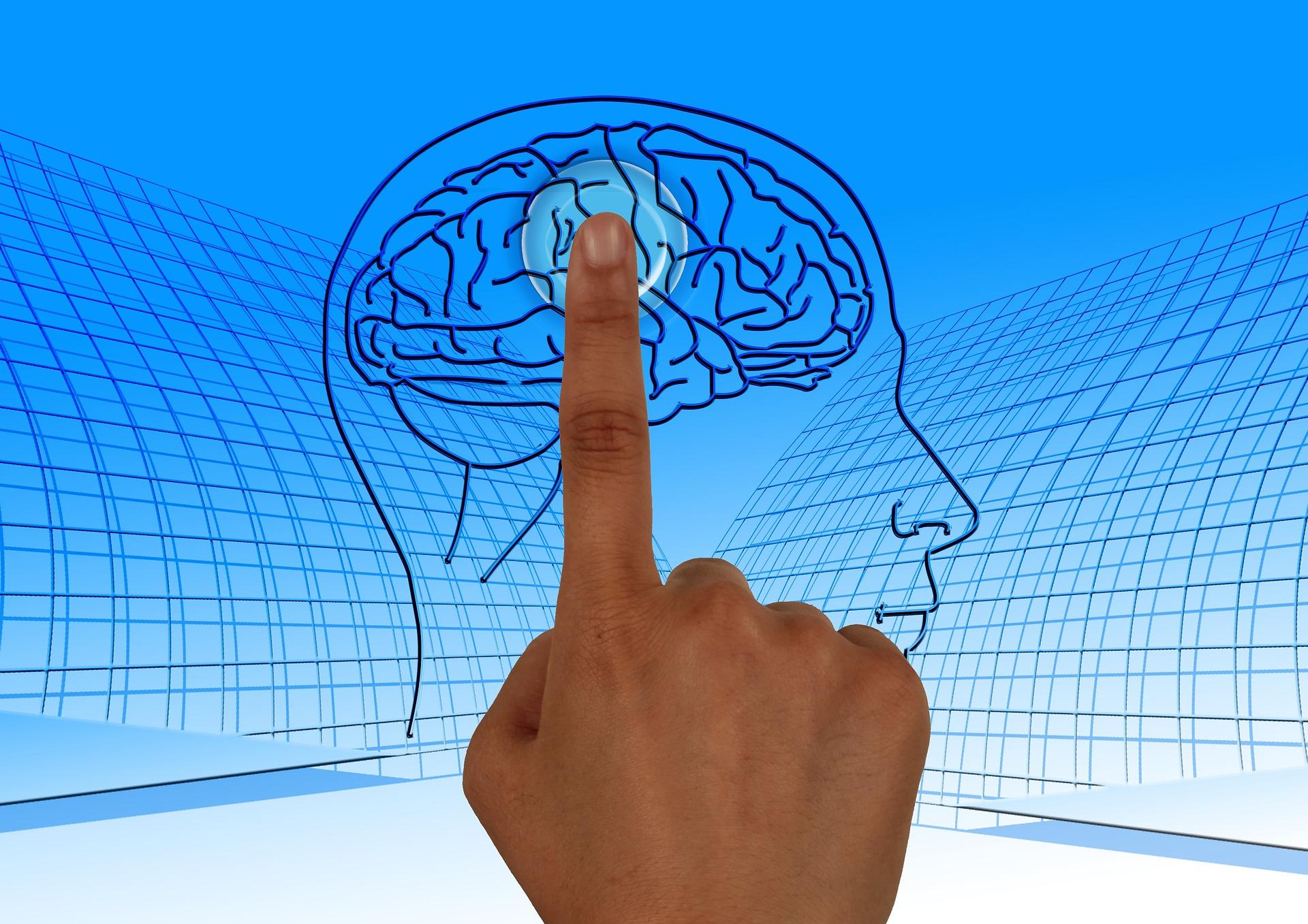 brain-770044_1920.jpg