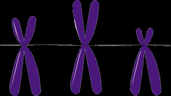 chromosomes-156403_1280.png