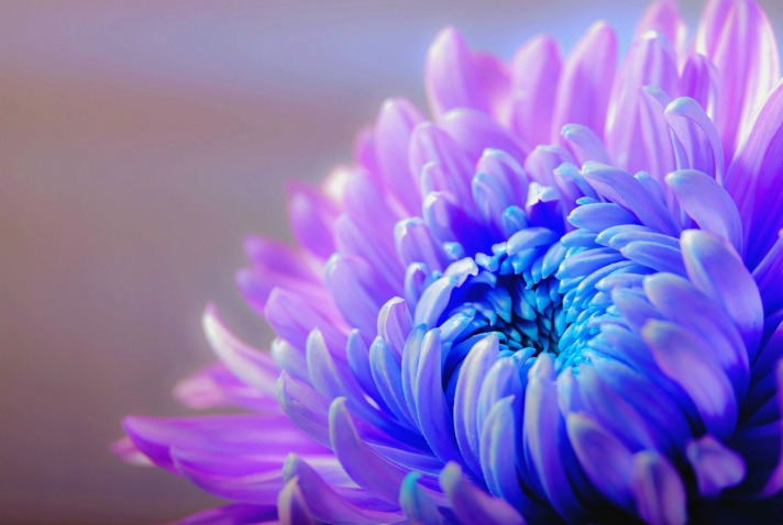 chrysanthemum-1332994_1920.jpg