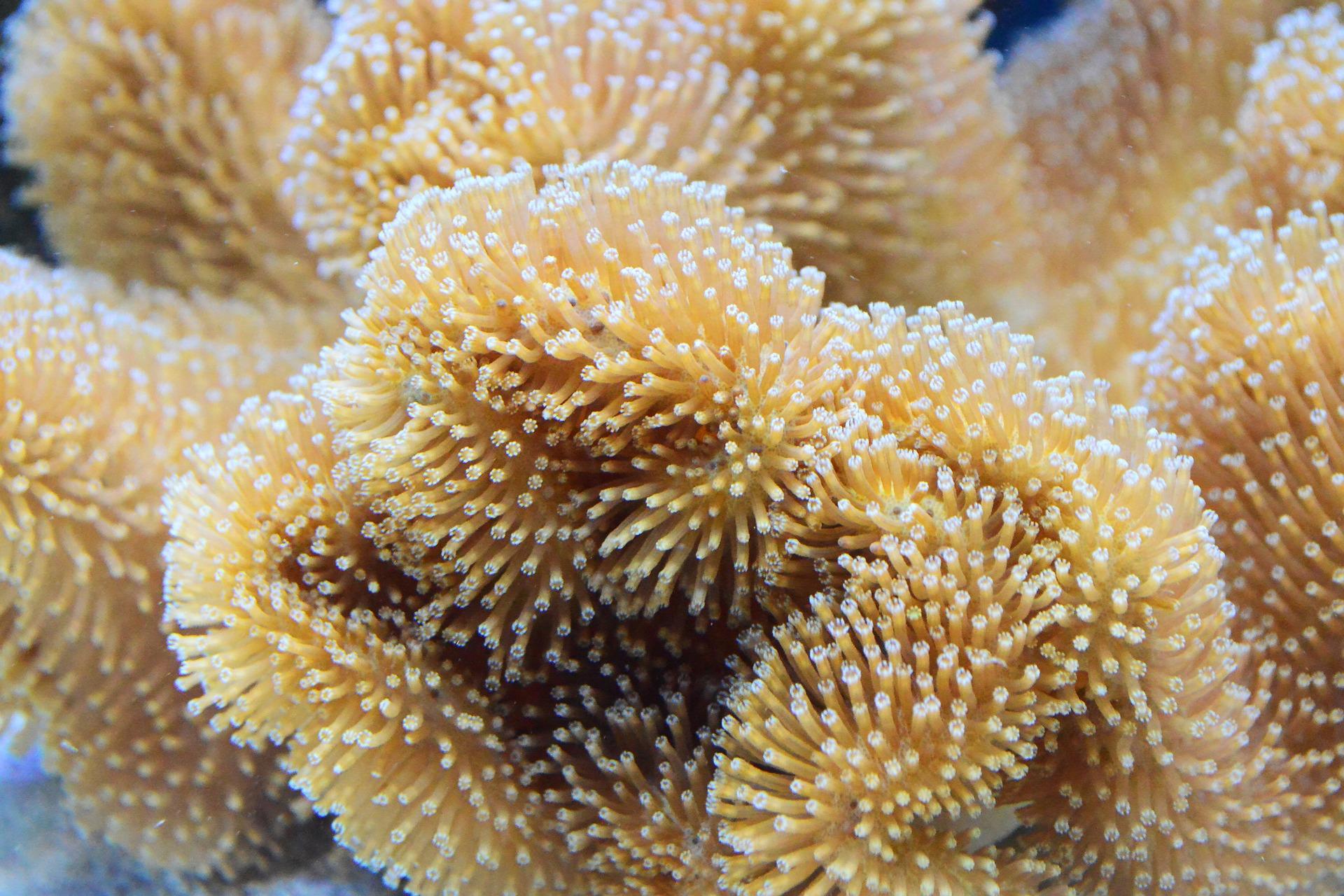coral-1318694_1920.jpg