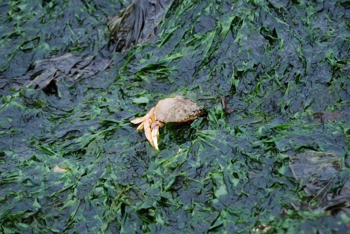 crab-1046421_1280.jpg