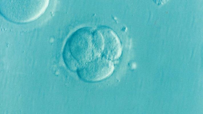embryo-1514192_1280.png