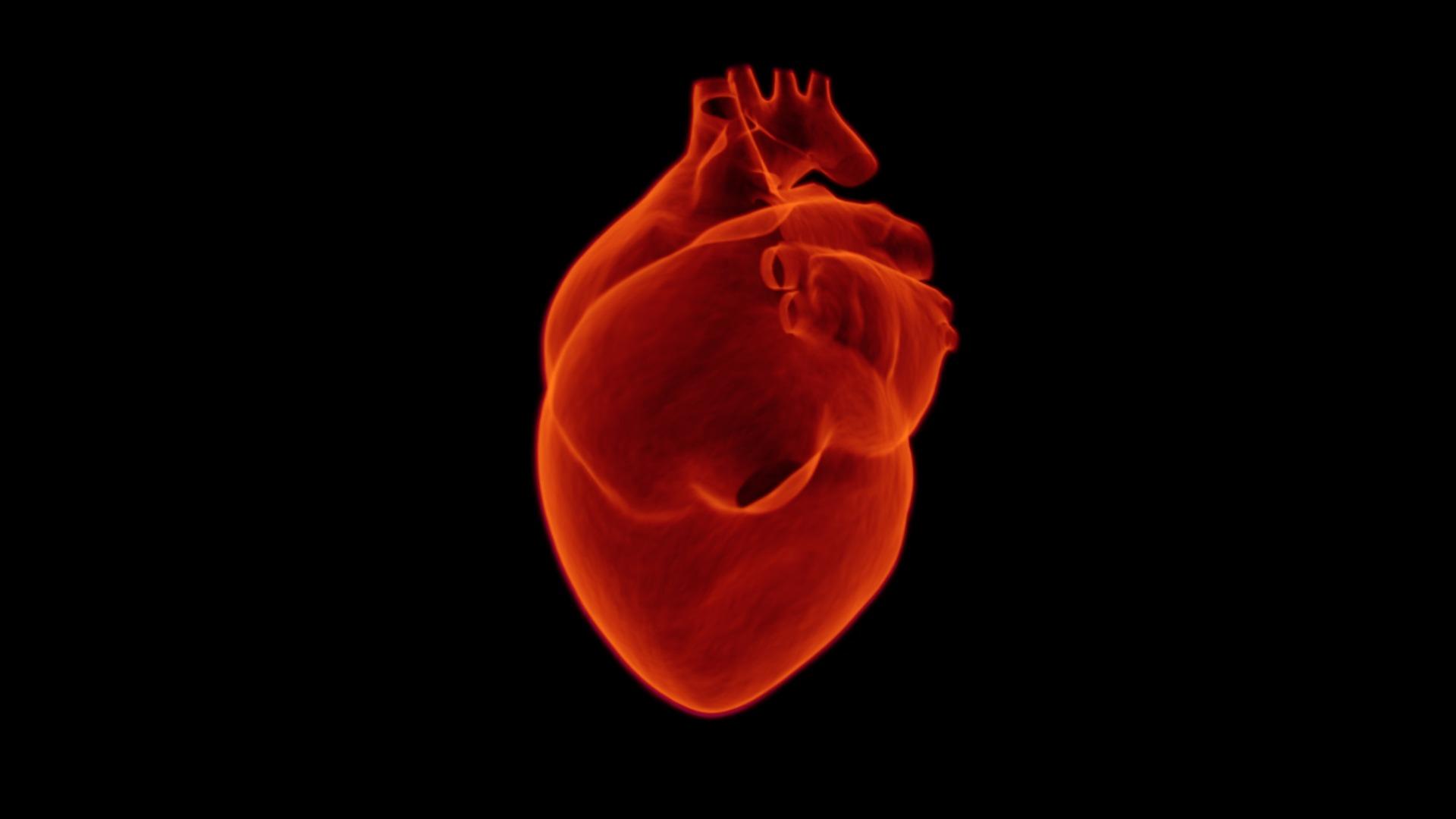 heart-1767552_1920.jpg